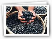 Le marché de fruit ouvert